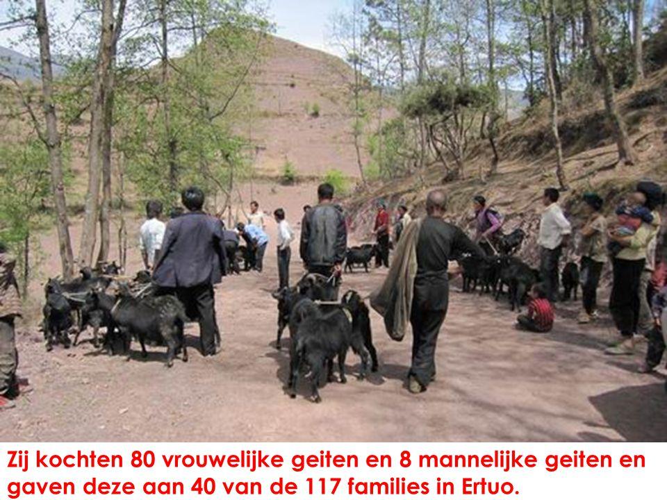 Zij kochten 80 vrouwelijke geiten en 8 mannelijke geiten en gaven deze aan 40 van de 117 families in Ertuo.