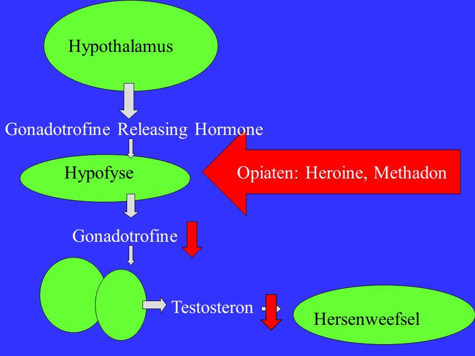 Hypothalamus Gonadotrofine Releasing Hormone Hypofyse Gonadotrofine Testosteron Hersenweefsel Opiaten: Heroine, Methadon