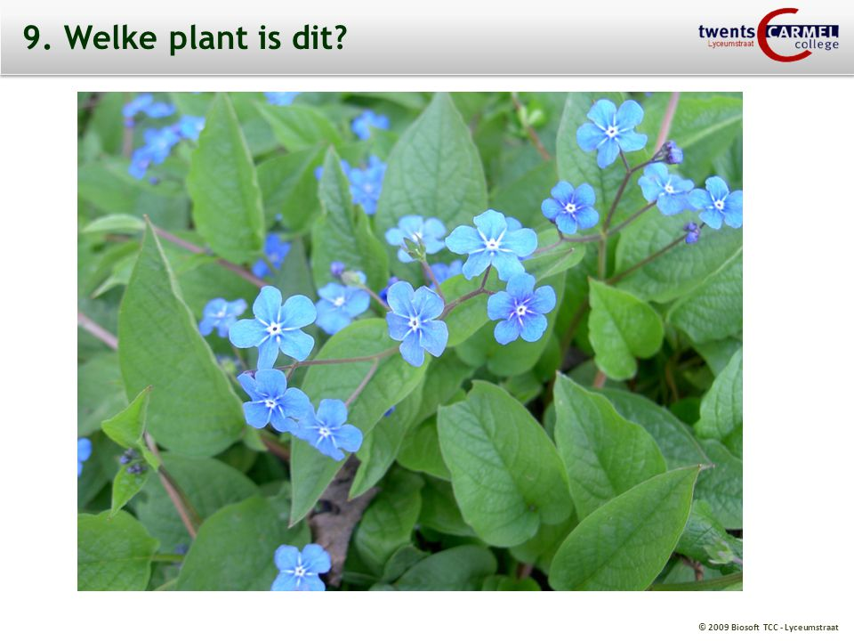© 2009 Biosoft TCC - Lyceumstraat 9. Welke plant is dit?