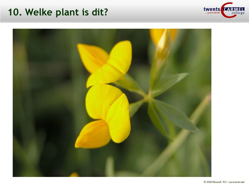 © 2009 Biosoft TCC - Lyceumstraat 10. Welke plant is dit?