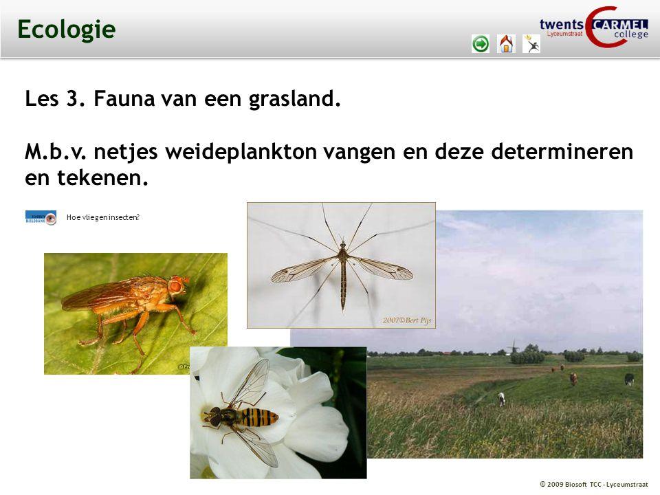 © 2009 Biosoft TCC - Lyceumstraat Ecologie Les 3.Fauna van een grasland.