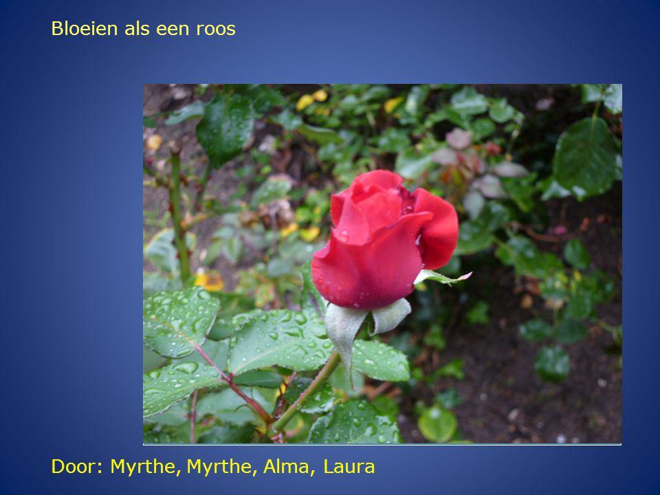 Door: Myrthe, Myrthe, Alma, Laura Bloeien als een roos