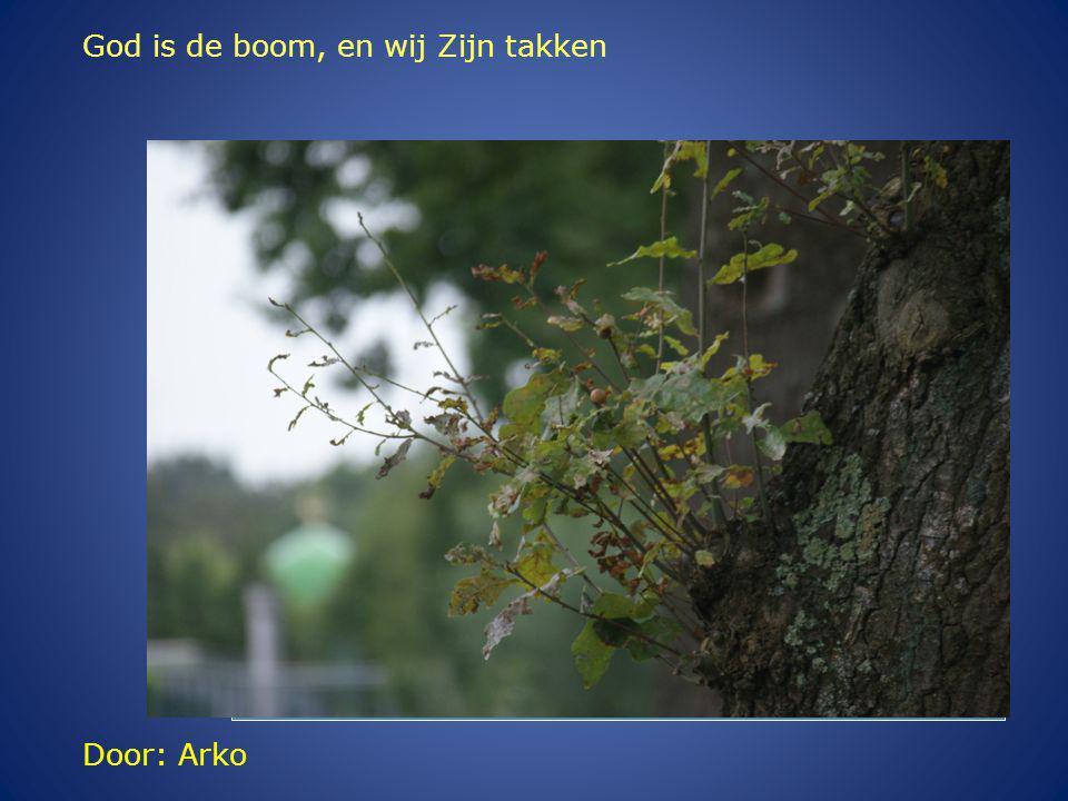Door: Arko God is de boom, en wij Zijn takken