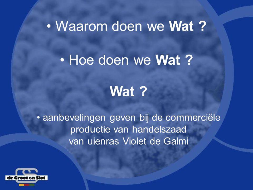 Wat ? aanbevelingen geven bij de commerciële productie van handelszaad van uienras Violet de Galmi Waarom doen we Wat ? Hoe doen we Wat ?