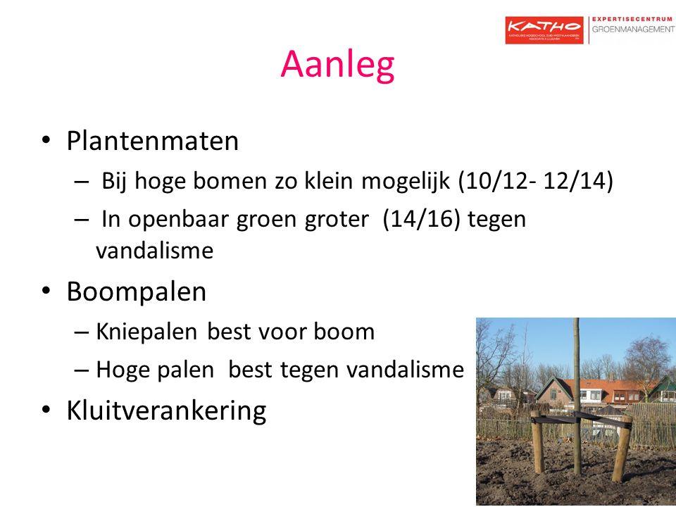 Aanleg Plantenmaten – Bij hoge bomen zo klein mogelijk (10/12- 12/14) – In openbaar groen groter (14/16) tegen vandalisme Boompalen – Kniepalen best v