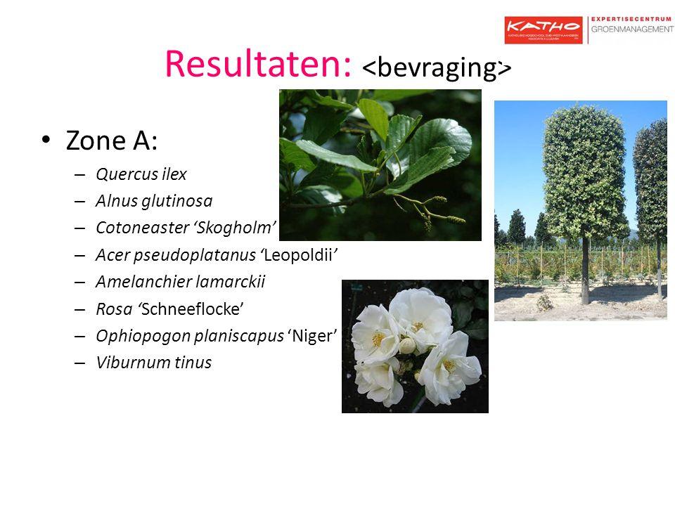 Resultaten: Zone A: – Quercus ilex – Alnus glutinosa – Cotoneaster 'Skogholm' – Acer pseudoplatanus 'Leopoldii' – Amelanchier lamarckii – Rosa 'Schnee