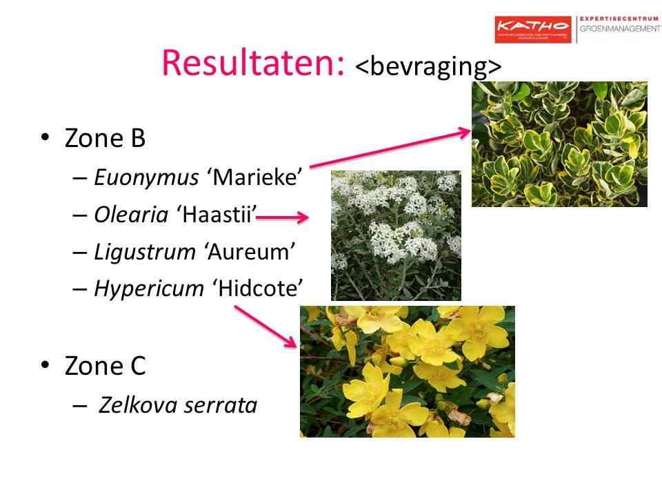 Resultaten: Zone B – Euonymus 'Marieke' – Olearia 'Haastii' – Ligustrum 'Aureum' – Hypericum 'Hidcote' Zone C – Zelkova serrata