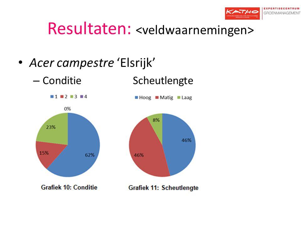 Resultaten: Acer campestre 'Elsrijk' – Conditie Scheutlengte