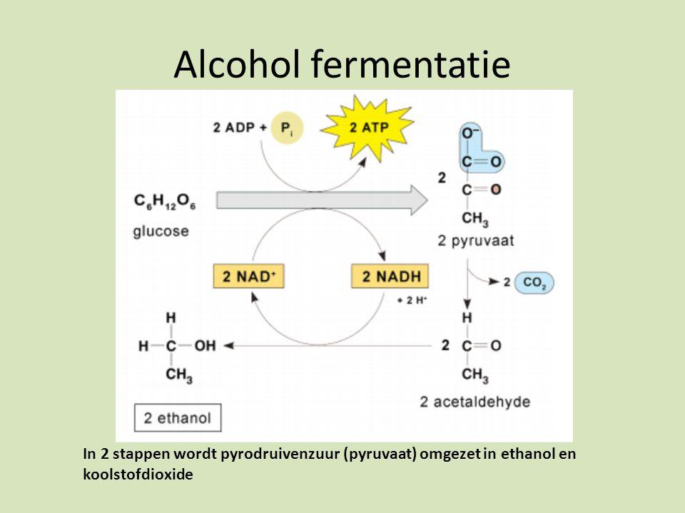 Alcohol fermentatie In 2 stappen wordt pyrodruivenzuur (pyruvaat) omgezet in ethanol en koolstofdioxide