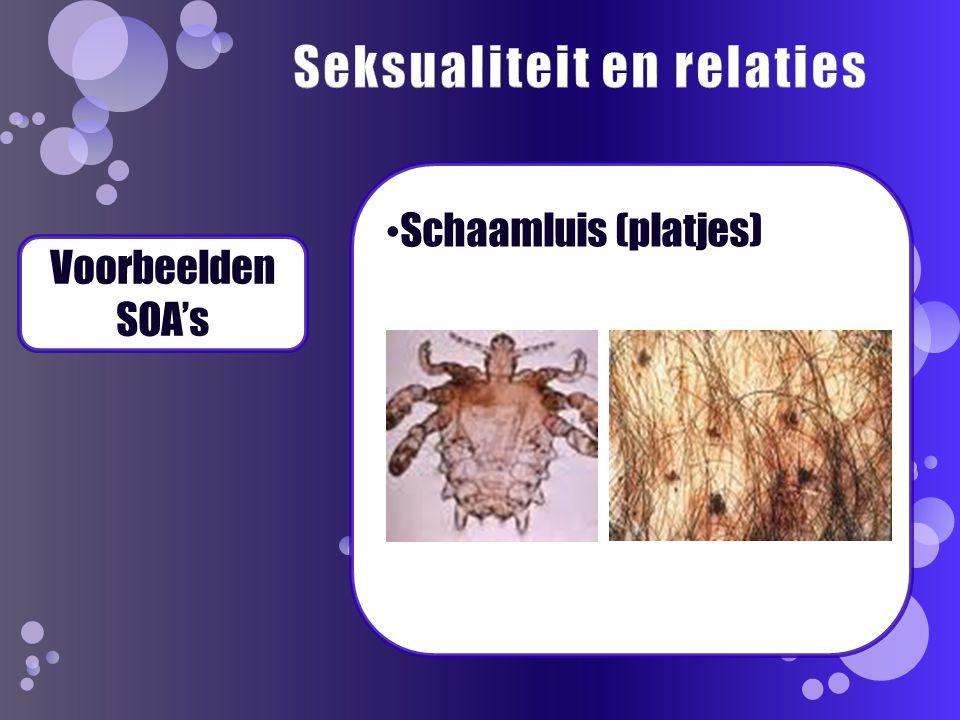 Voorbeelden SOA's Schaamluis (platjes)