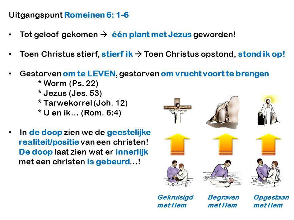 Uitgangspunt Romeinen 6: 1-6 Tot geloof gekomen  één plant met Jezus geworden! Toen Christus stierf, stierf ik  Toen Christus opstond, stond ik op!