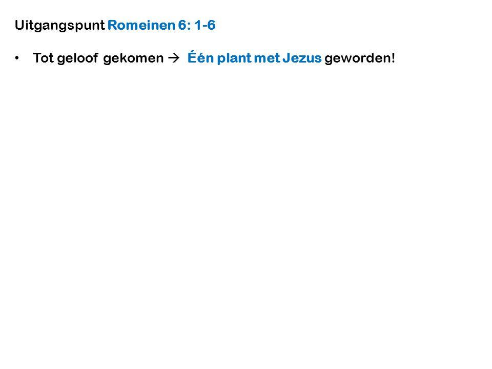 Tot geloof gekomen  Één plant met Jezus geworden!