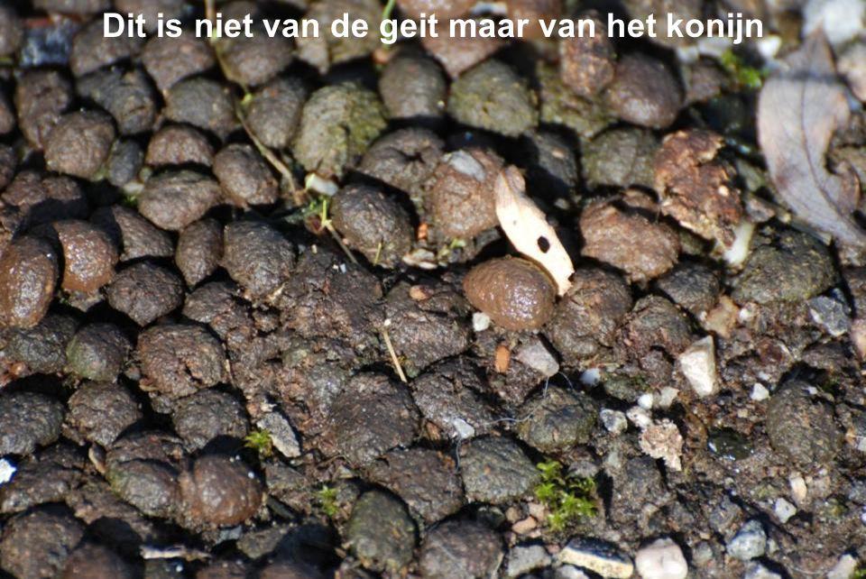 Algerabrug en de stormvloedkering Hollandse IJssel, gezien vanaf het eiland