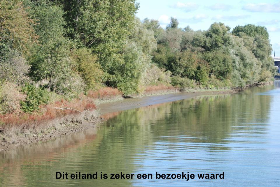 En natuurlijk zie je op elke hoek van Rotterdam de Euromast