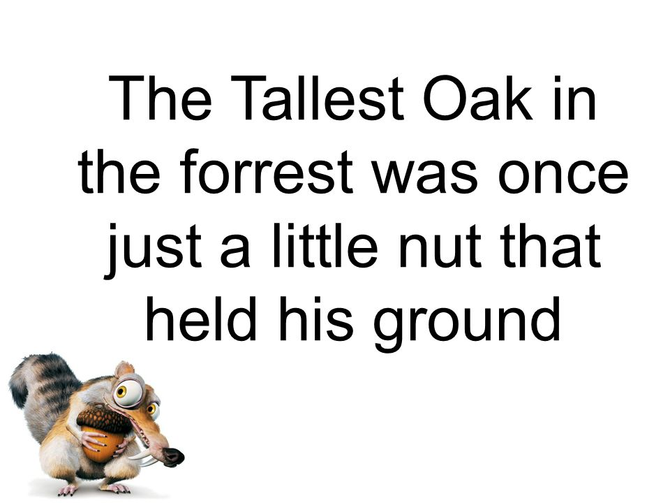 The Tallest Oak in the forrest was once just a little nut that held his ground