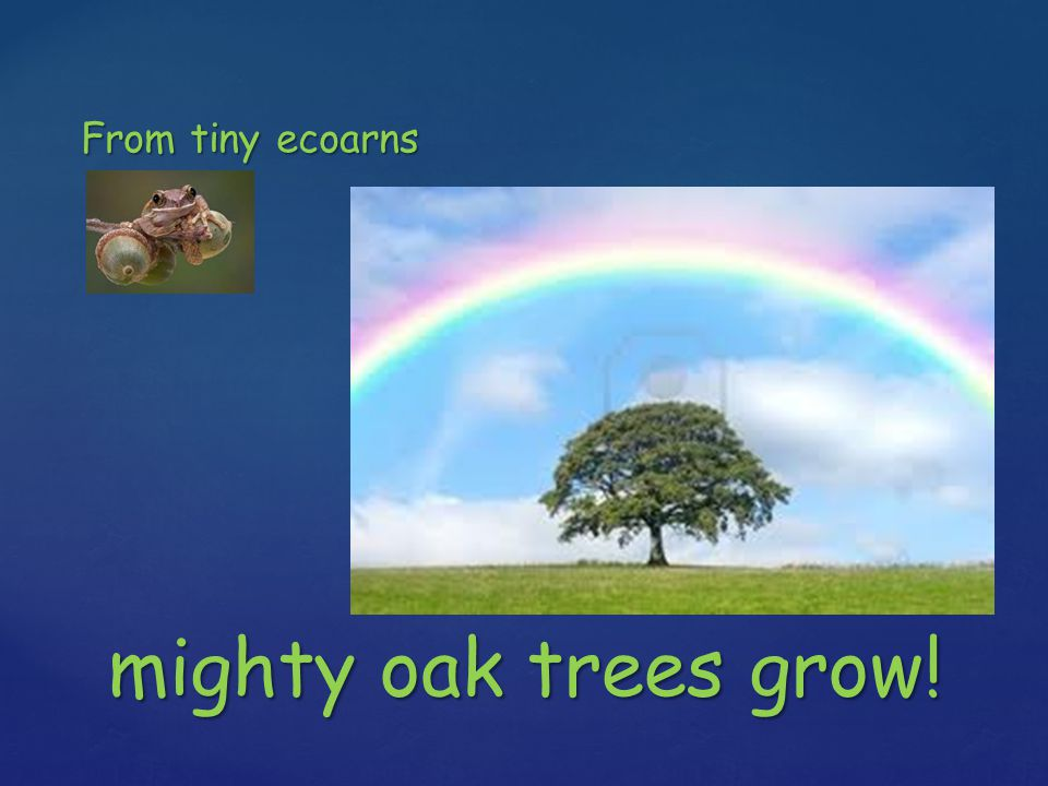 From tiny ecoarns mighty oak trees grow!