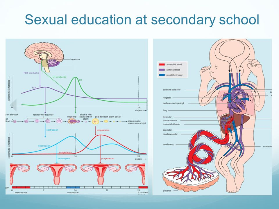 Sexual education at secondary school